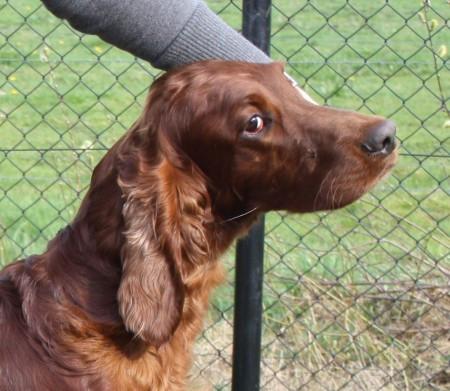 Bingley 2 jaar