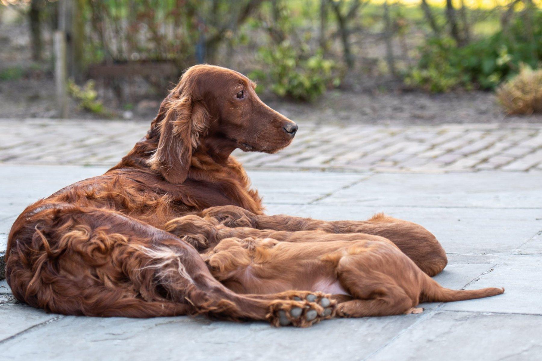 Pups-en-Liz